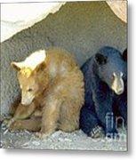 Cubs In A Pod Metal Print by Kim Petitt
