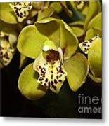 Cumbidium Orchid Metal Print