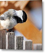 Curious Chickadee Metal Print