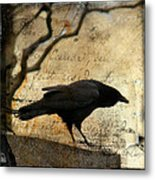 Curious Crow Metal Print
