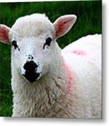 Curious Lamb Metal Print