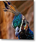 Curious Peacock Digital Art Metal Print