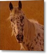 Curious Pony With Spots Metal Print