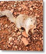 Curious Squirrel 2 Metal Print