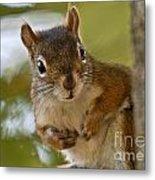 Curious Squirrel Metal Print