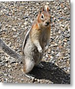 Curious Visitor Metal Print