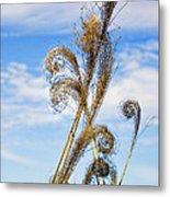 Curled Grasses Metal Print