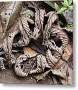 Curled Leaves Metal Print