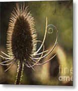 Curly And Spiky. Metal Print