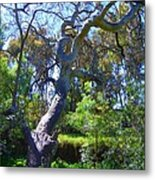Curly Tree Metal Print