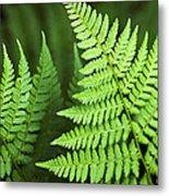 Curved Fern Leaf Metal Print