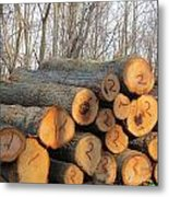 Cut Logs Metal Print