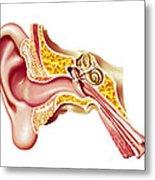 Cutaway Diagram Of Human Ear Metal Print