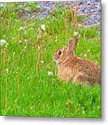 Cute And Fluffy - Digital Painting Effect Metal Print