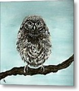 Cute Baby Owl Metal Print