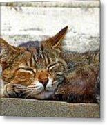 Cute Cat Metal Print by Borislav Marinic