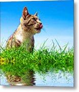 Cute Cat Outdoor Portait Metal Print