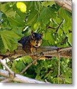 Cute Fuzzy Squirrel In Tree Metal Print