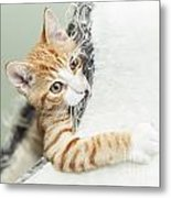 Cute Ginger Kitten In Igloo Metal Print