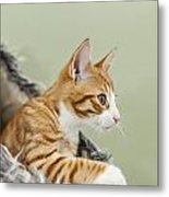 Cute Ginger Kitten On The Loookout Metal Print