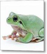 Cute Green Frog Metal Print