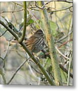 Cute Little Thrush Metal Print