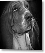 Cute Overload - The Basset Hound Metal Print by Christine Till