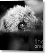 Cute Pup Sneek A Peek Metal Print