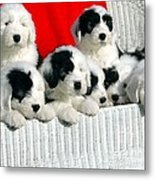 Cute Puppies Metal Print