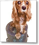Cute Puppy Card Metal Print by Edward Fielding