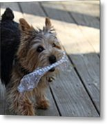 Cutest Dog Ever - Animal - 01135 Metal Print by DC Photographer