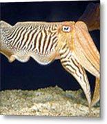 Cuttlefish 1 Metal Print