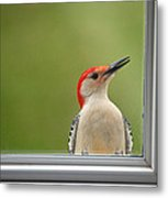 Cw My Crazy Woodpecker Metal Print