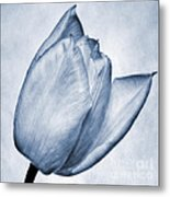 Cyanotype Tulip Metal Print