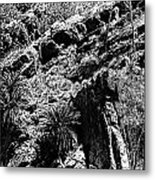 Cycads At Cliffs' Edge Black And White Metal Print