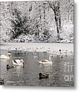 Cygnets In Winter Metal Print