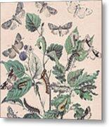 Cymatophoridae - Acronyctidae Metal Print