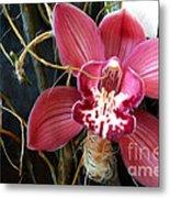 Cymbidium Flower Metal Print