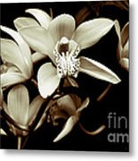 Cymbidium Orchids Metal Print