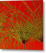 Cyperus Papyrus Abstract Metal Print