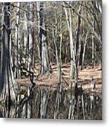 Cypress Bog Metal Print