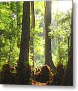 Cypress Forest Metal Print
