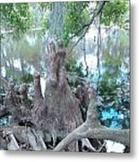 Cypress Knee Family Metal Print