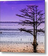 Cypress Purple Sky 2 Metal Print