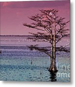 Cypress Purple Sky Metal Print