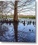 Cypress Reflections Metal Print