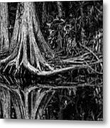 Cypress Roots - Bw Metal Print