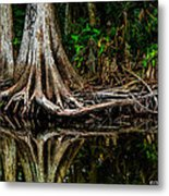 Cypress Roots Metal Print by Christopher Holmes