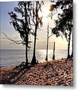 Cypress Shore Metal Print