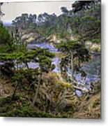 Cypress Metal Print by Stephen Campbell
